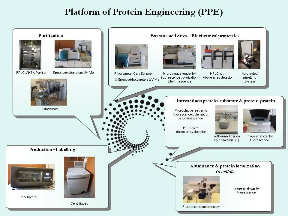 Platform Protein Engineering